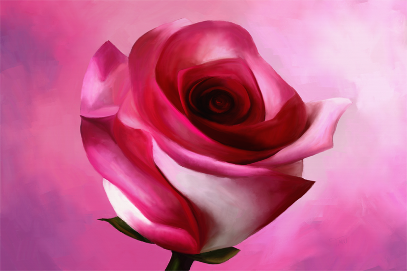 Digital painting of a rose in pink and red color variations