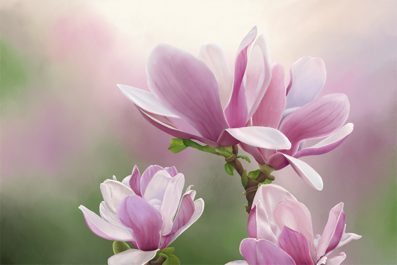 Digital soft pastel drawing of magnolia flowers in soft pink