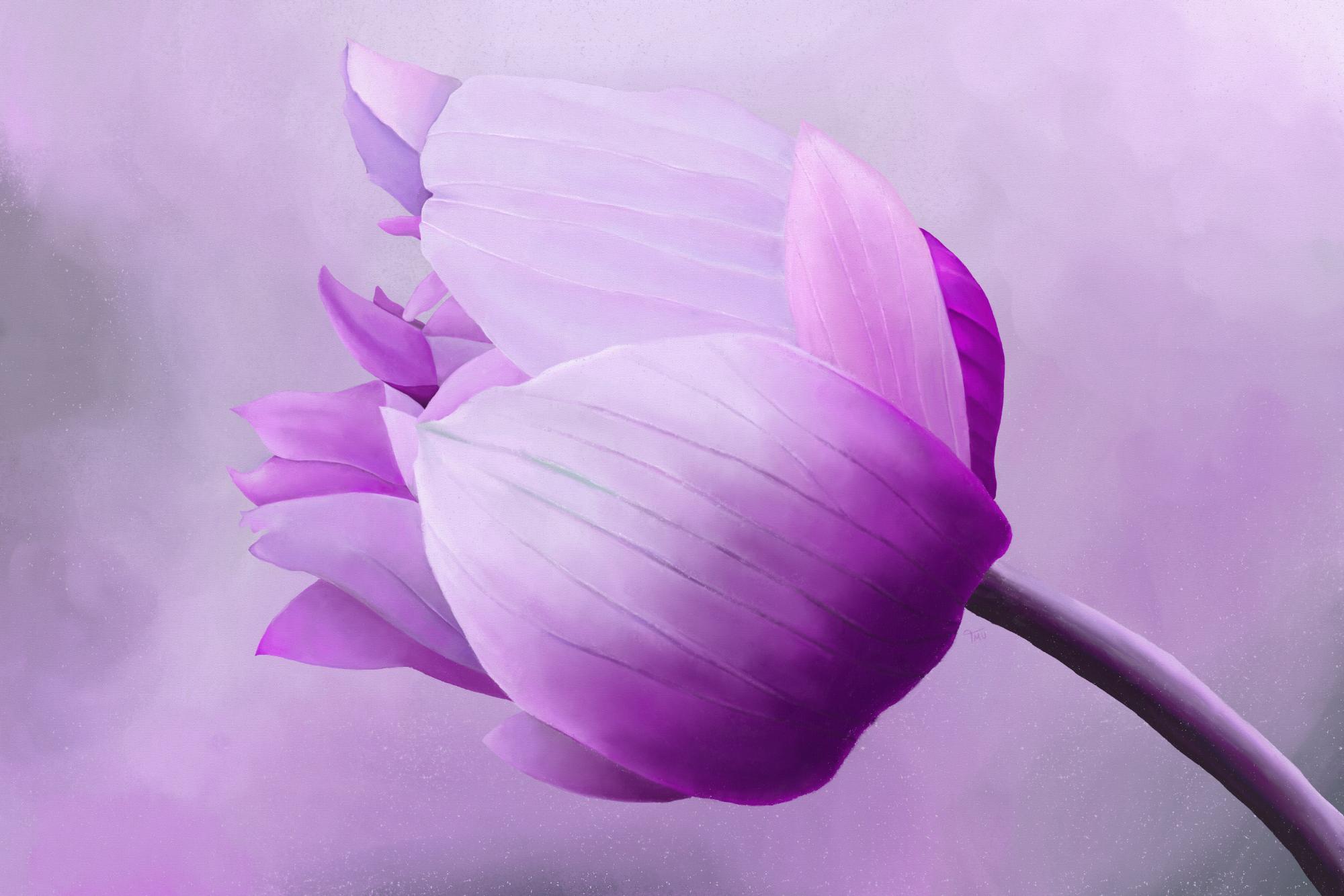 Digital painting of a purple anemone flower
