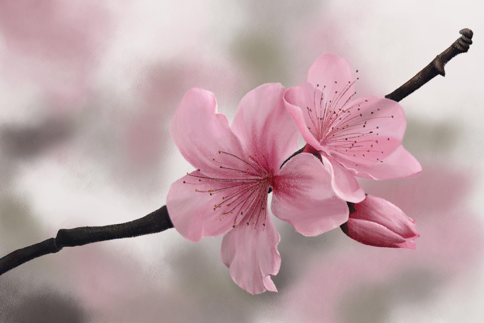 Digital soft pastel painting of Japanese Cherry flowers
