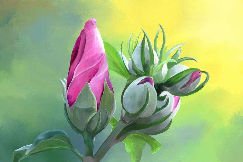 Digitaal acrylschilderij van een hibiscus bloem in roze en groen
