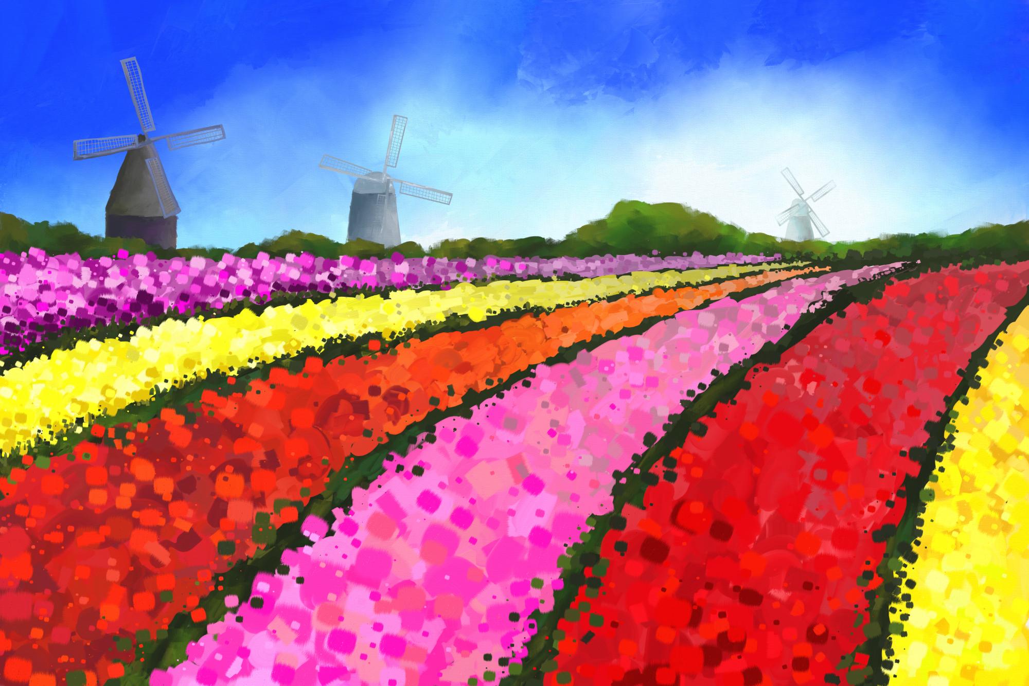 Digital acrylic painting of Dutch Tulip-fields with 3 Windmills