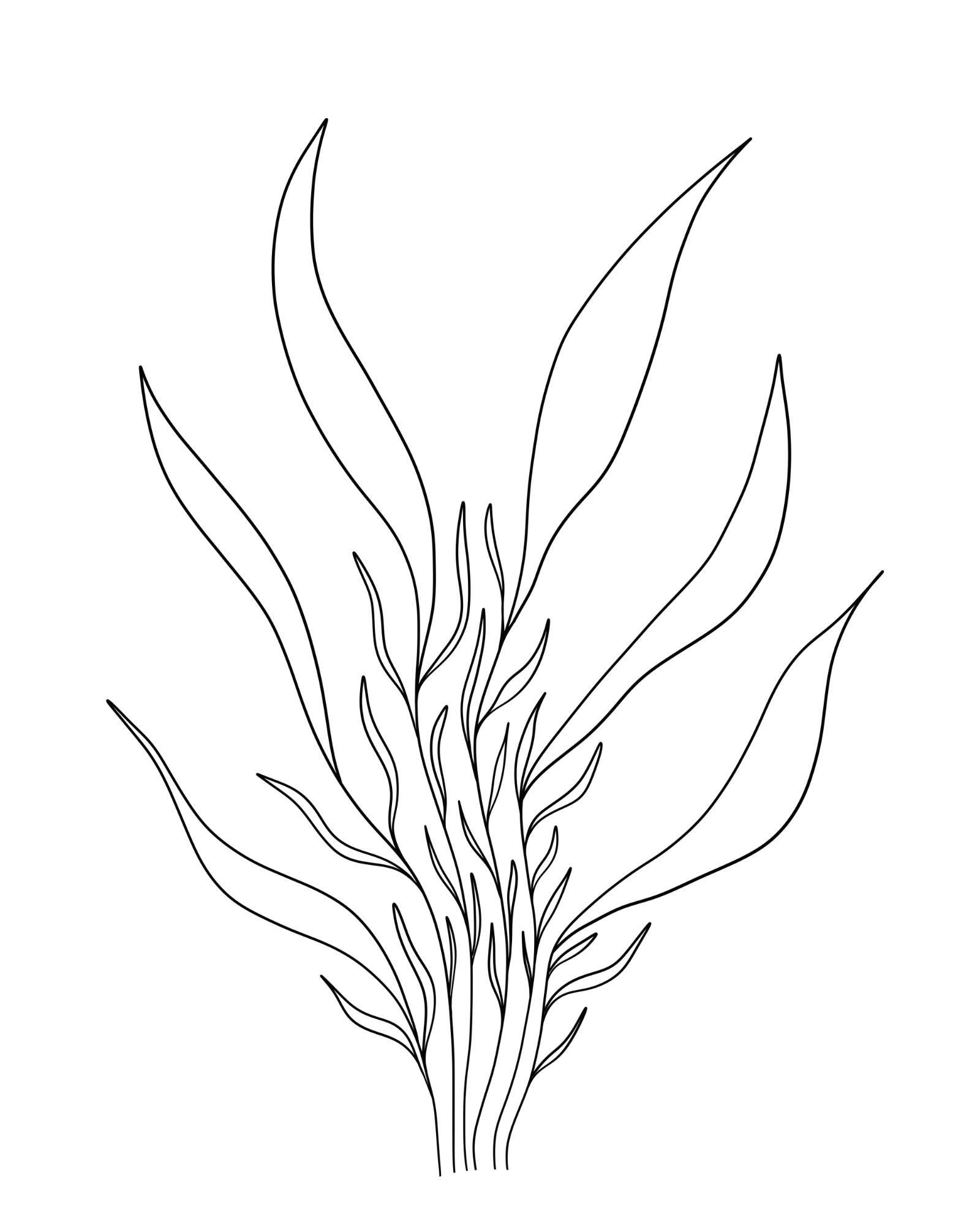 Een plant tekenen